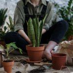 Літо в Італії: Євросоюз шукає еко-волонтерів на роботу біля узбережжя Адріатичного моря