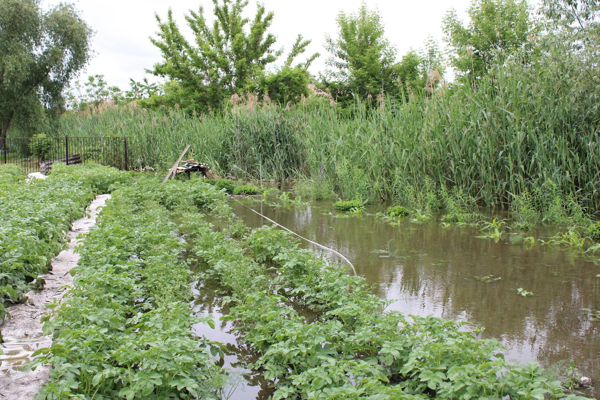 затопленный огород в Бахмуте