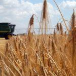 Старт ринку землі: з 1 липня українці можуть продавати й купляти землі