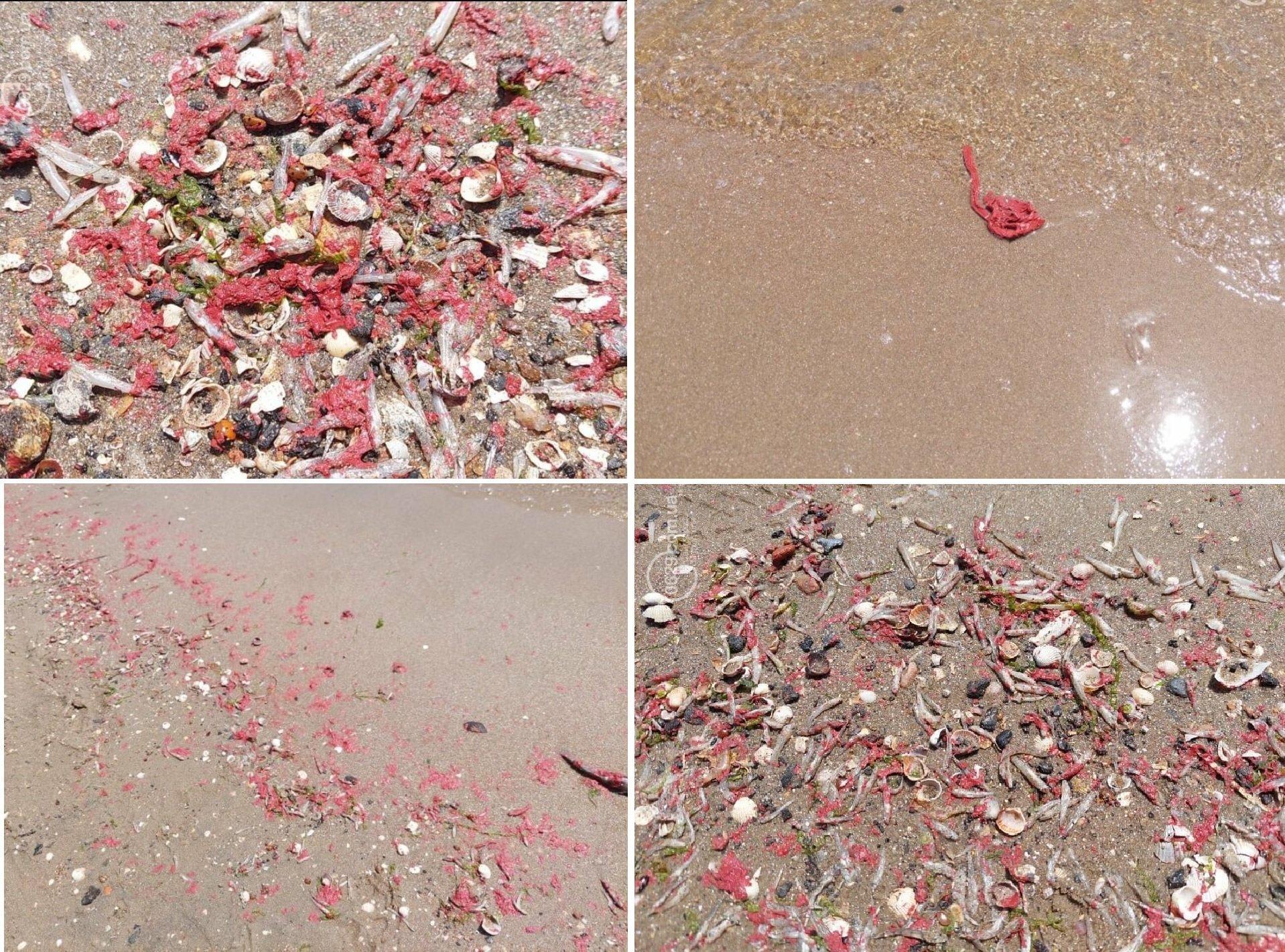 В Азовському морі від виливу фарби на берег почало викидати мертву рибу