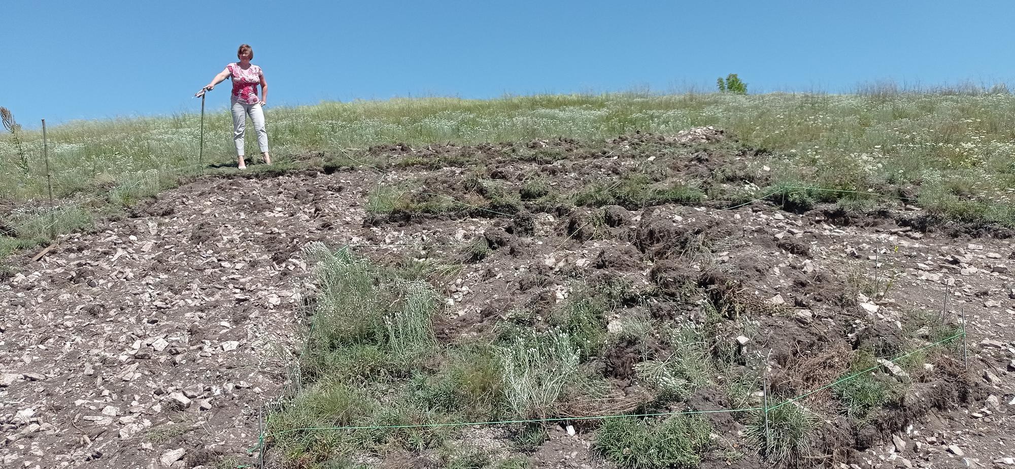 уничтожение памятника природы Ступки Голубовские в Бахмутской громаде