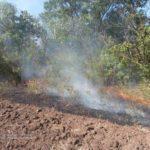На Донетчине за день вспыхнуло почти полсотни пожаров (ФОТО)