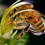 """""""Пчелы — это моя семья, я по ним скучаю"""". Краматорчанка рассказала, как мед с ее пасеки получил международную награду (интервью)"""