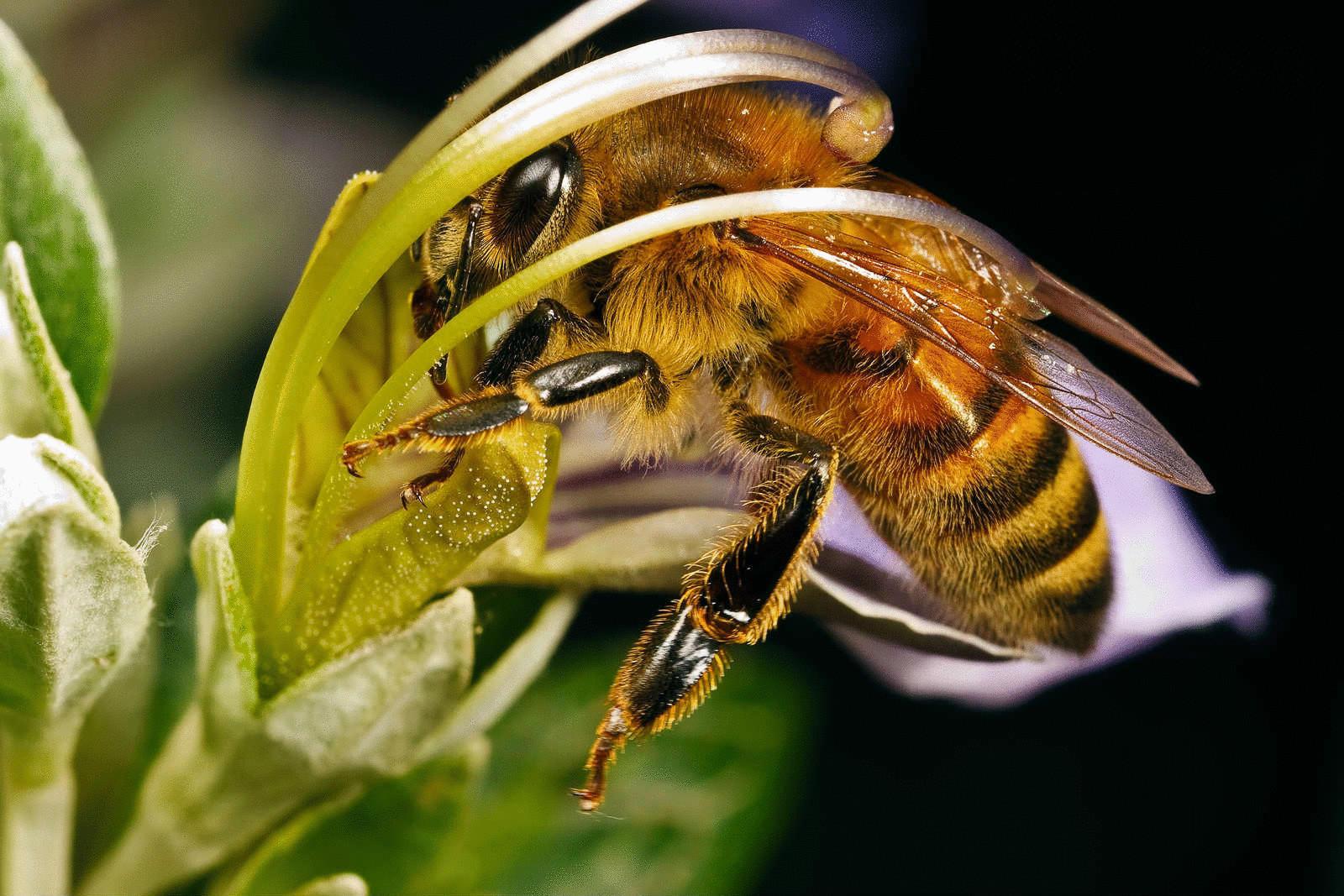 Бджолярка з Краматорська розповіла, як її мед здобув срібну нагороду на міжнародному конкурсі