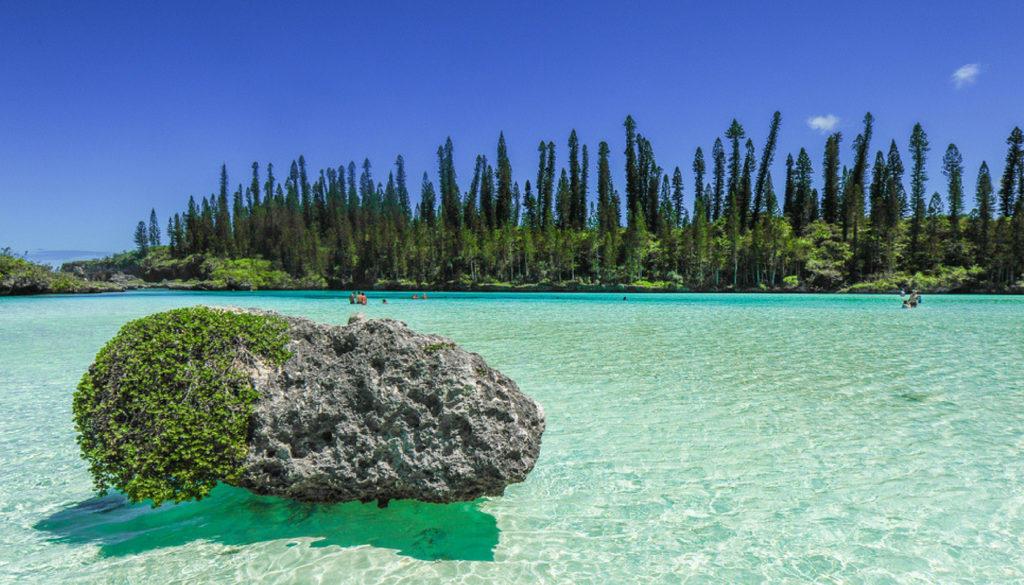 араукарії в Новій Каледонії